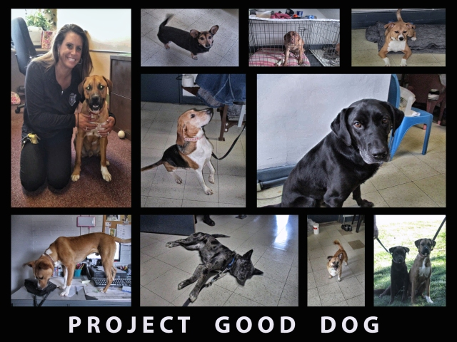 Project Good Dog Collage PNG copy